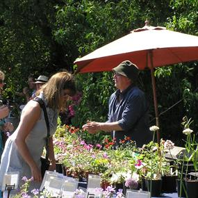 May Plant Hunters' Fair at the 1620's House & Garden, Donington Le Heath